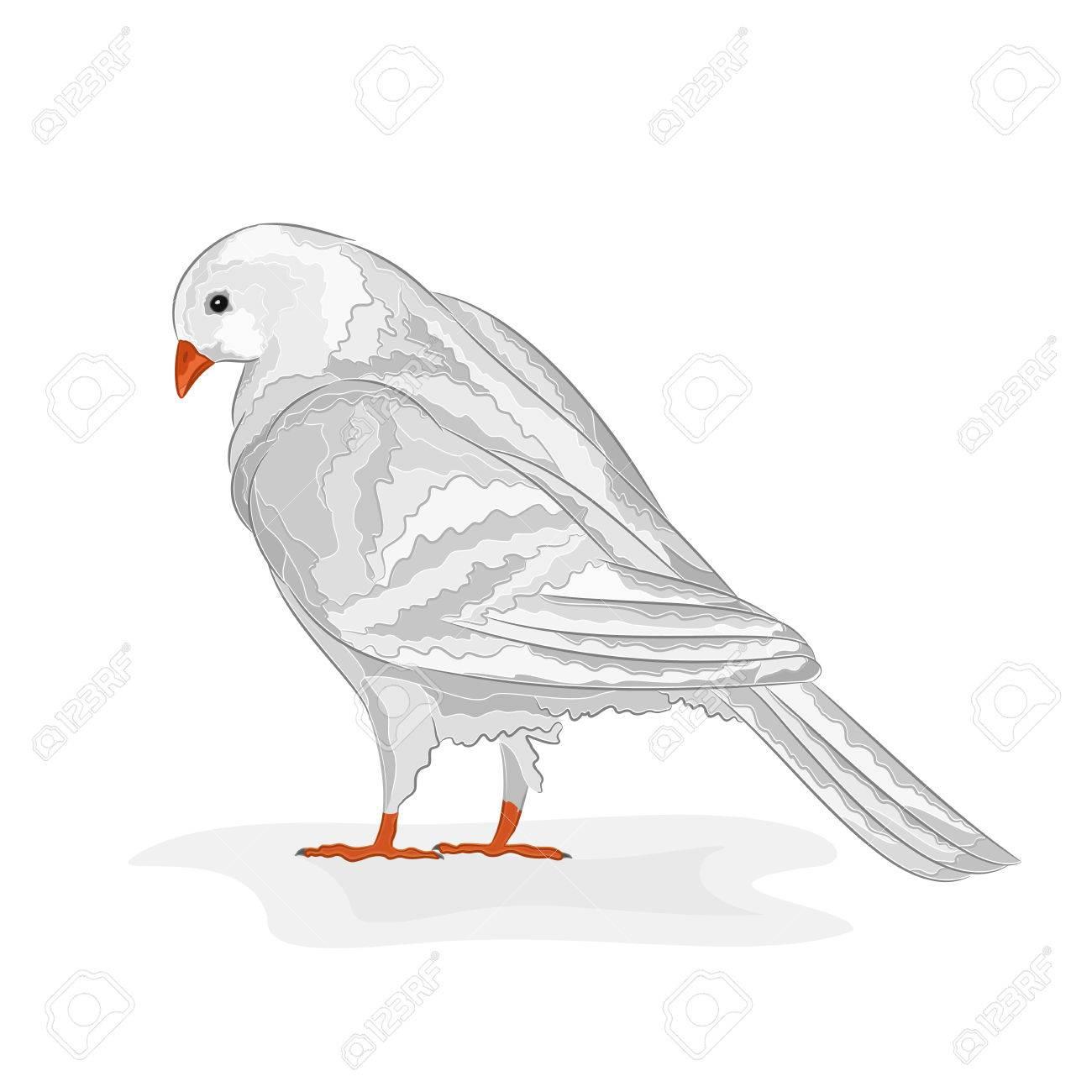 38966799-white-pigeon-white-dove-symbol-peace-vector-illustration