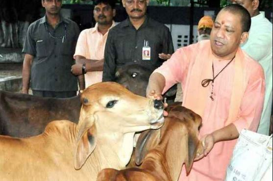 ગાયો માટે યોગી સરકારે ખોલ્યો ખજાનો, ગૌસંરક્ષણ માટે ફાળવ્યા 600 કરોડ રૂપિયા