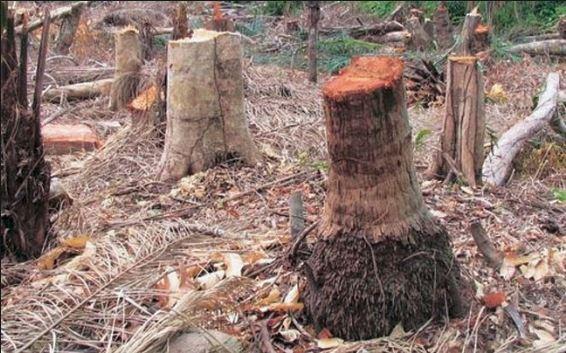 વિશ્વ પર્યાવરણ દિવસ: આમને આમ ચાલતું રહેશે તો ઉજ્જડ થઈ જશે ધરતી, દર વર્ષે કપાય છે 15 અબજથી વધુ વૃક્ષો