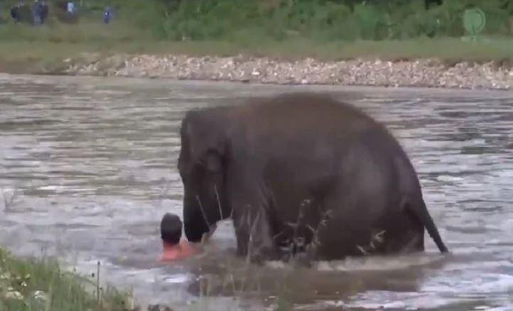 """હાથીની """"માનવતા""""નો Viral Video: ડૂબતા વ્યક્તિને પાણીમાં ઉતરીને હાથીના બચ્ચાએ બચાવ્યો"""