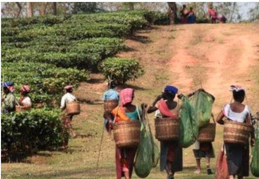 ભારત તરફથી પાકિસ્તાનને  નિકાસ કરવામાં આવતી ચ્હામાં 50 ટકાનો ઘટાડો-વેપારીઓને પેમેન્ટ બાબતે આશંકાઓ