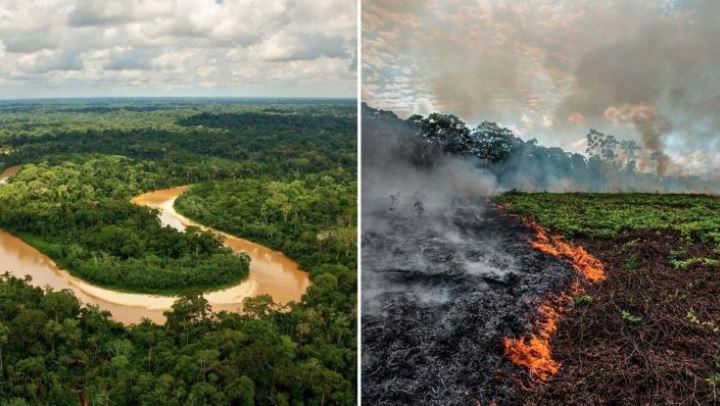 બ્રાઝિલના અમેઝોન જંગલમાં વૃક્ષોના સફાયાએ એક દાયકાનો રેકોર્ડ તોડ્યો