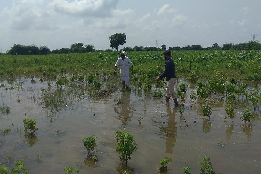 Patan-Heavy-Rain_FARMER