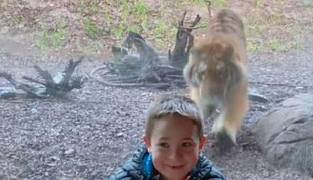 VIRAL VIDEO: ઓહો! જંગલી વાઘે અચાનક બાળક પર કર્યો હુમલો! જોઇને તમારા હોંશ ઉડી જશે