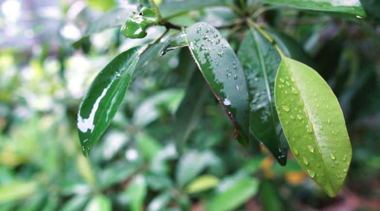 વરસાદની આગાહી વચ્ચે ડાંગમાં માવઠુ, ખેડૂતો ચિંતિત