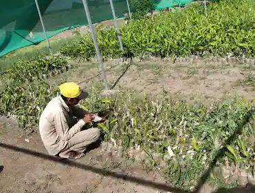 Farming in Jamnagar