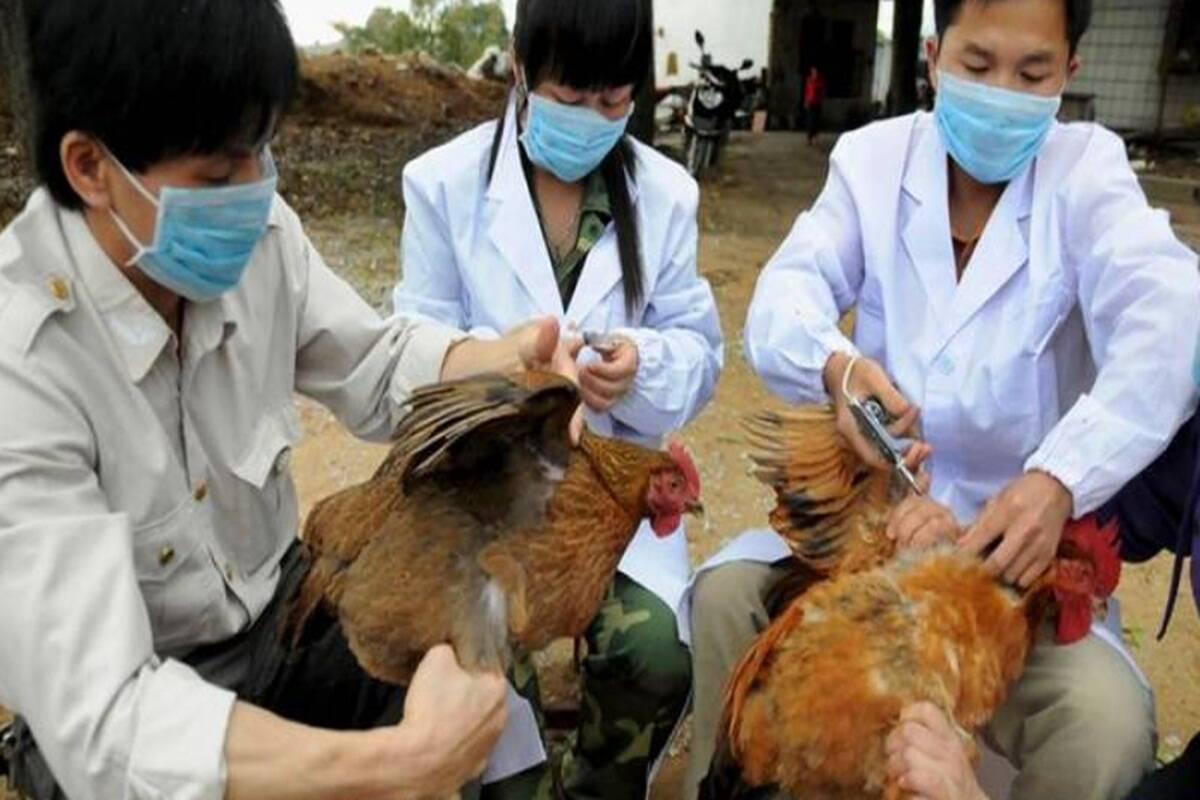 H10N3-bird-flu