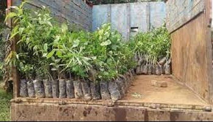 કોરોનાએ લોકોને કર્યાં સજાગઃ ઓક્સિજન આપતા છોડની માગમાં 50 ટકાનો વધારો