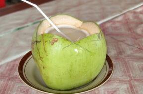 coconut-sandesh-copy