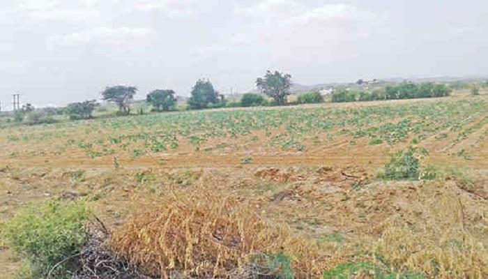 પીપલસટ ગામની ઘટનાઃ ખેડુતે વાડમાં વીજ કરંટ મુક્યો અને તેના પરિવારના ત્રણ સભ્યો ભોગ બન્યાં