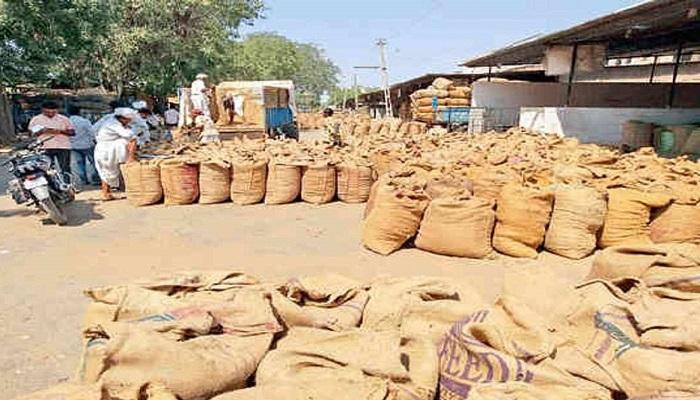 બનાસકાંઠામાં મગફળીનું મબલખ ઉત્પાદન, ડીસા માર્કેટ યાર્ડમાં રોજ 50,000 બોરીની આવક